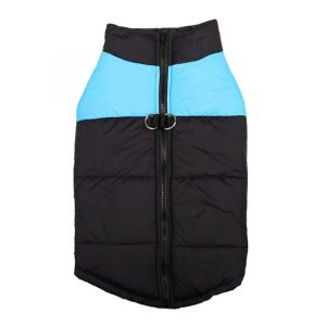 blue dog winter jacket