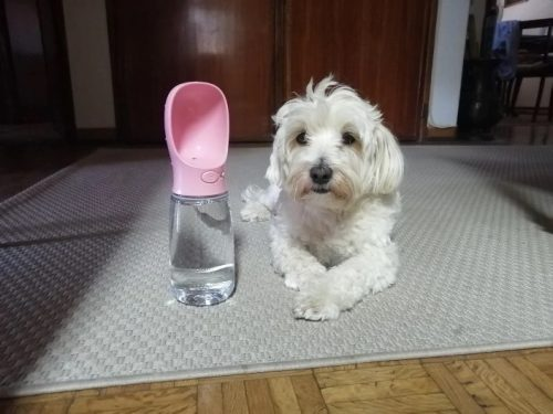 dog-with-water-pink-bottle