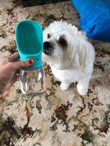 white-dog-with-water-blue-bottle