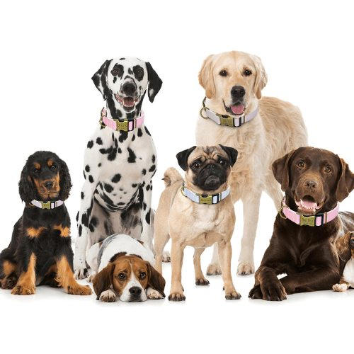 family of dogs with custom dog looks good collars