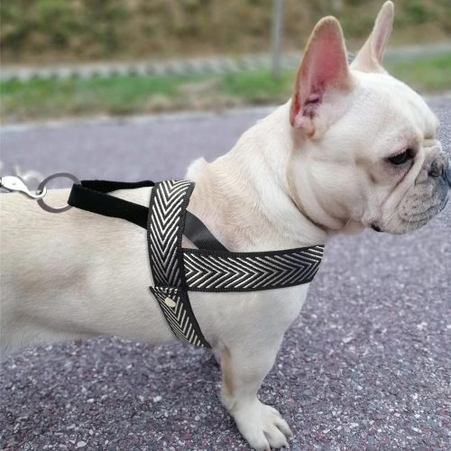 dog harness with arrow pattern french pulldog