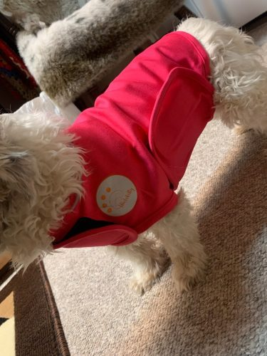 little-dog-with-stress-vest-pink
