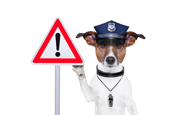 Jack russell terrier dog holding stop sign police