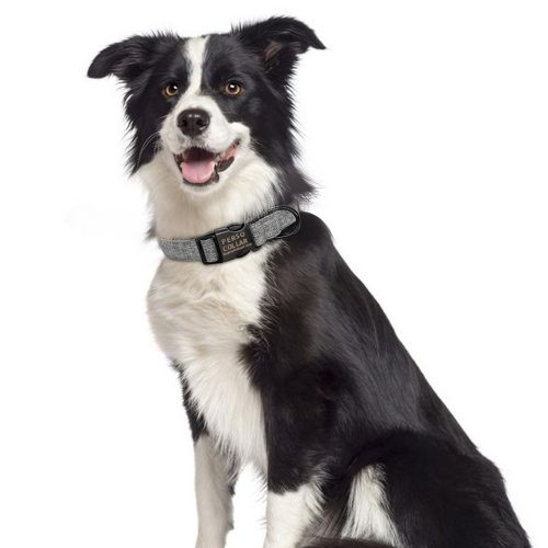 personalized collar modern border collie