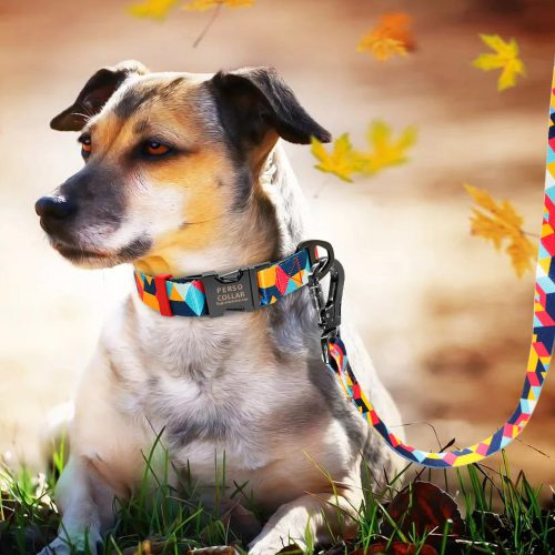 unknown dog breed with perso modern collar and leash