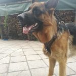 Huge dog product diesel review photo2