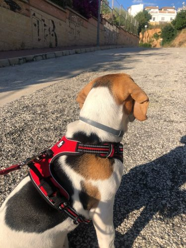 biglis dog product diesel review photo