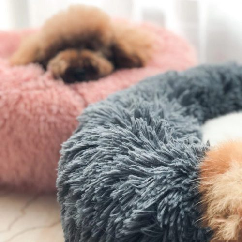 dog cloud bed feature
