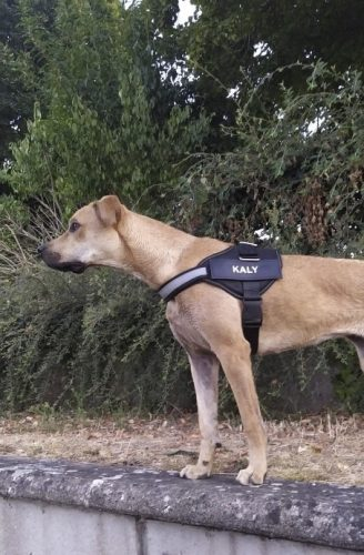 Dog with personalized custom dog harness