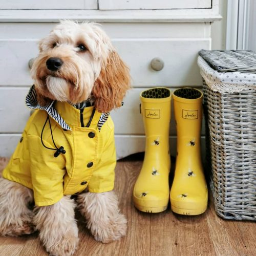 cute fluffy dog with yellow raincoat