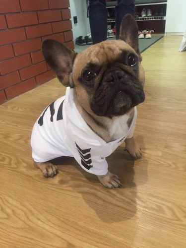 woof dog hoodie for dogs