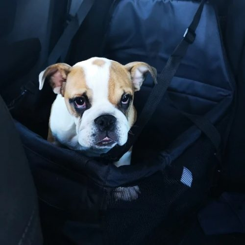 litle-dog-in-car-with-car-basket