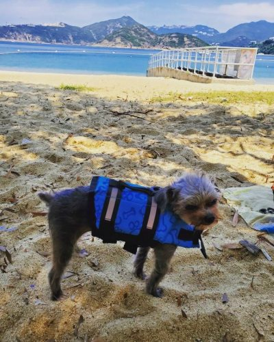 little-dog-beach-with-life-jacket
