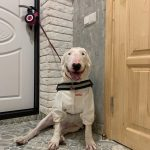 white dog product laika review1