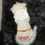 white dog product laika review2