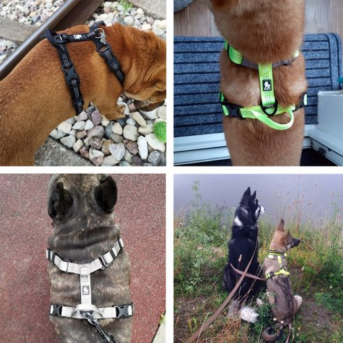 Otto dog harness reviews