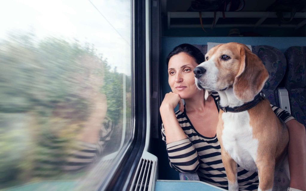 beagle dog with owner on a train