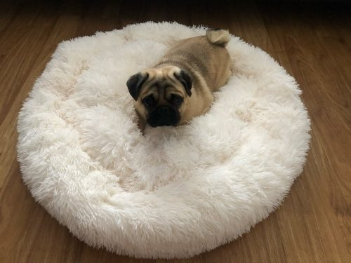pug-with-white-cloud-bed