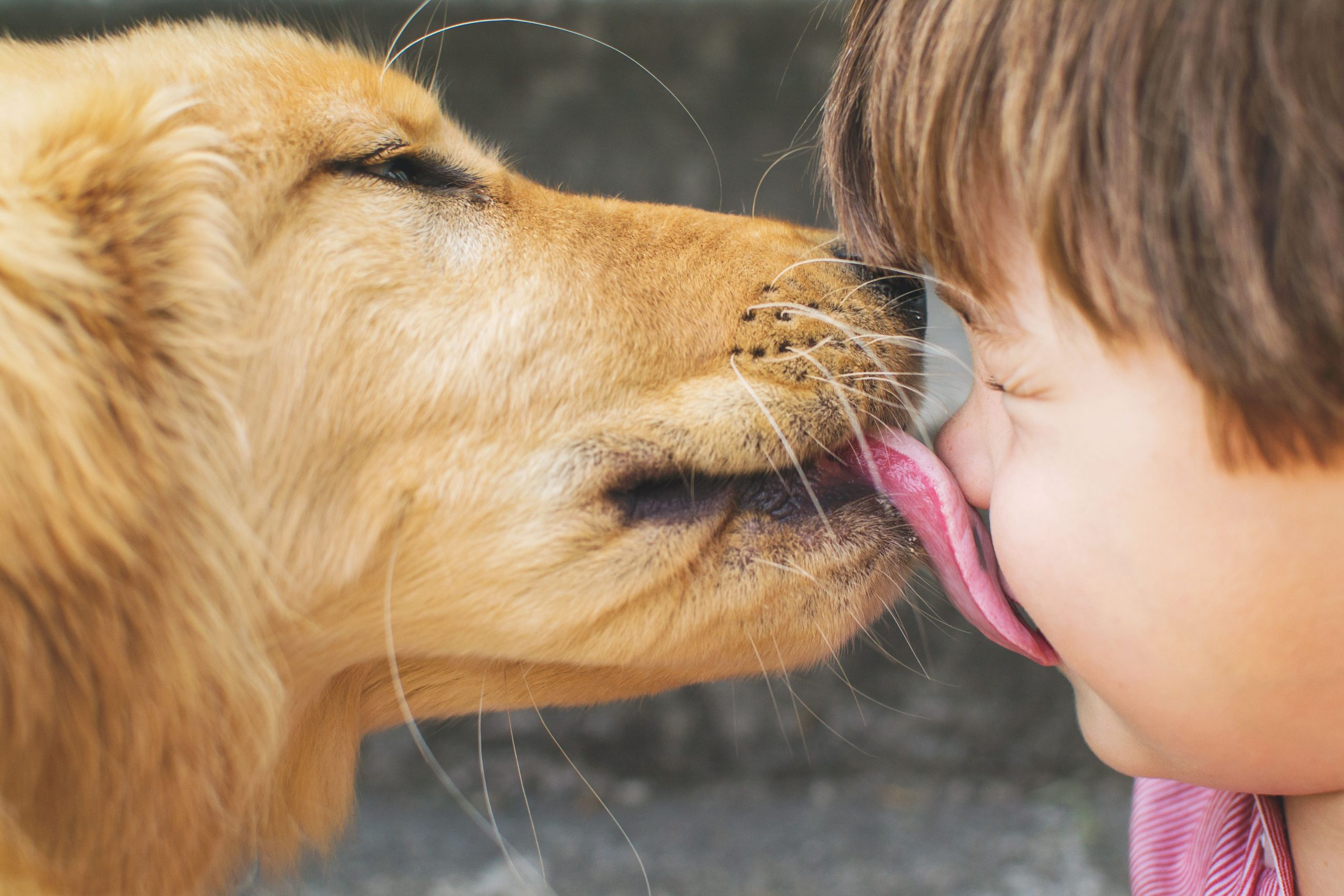 why do dogs love licking people?