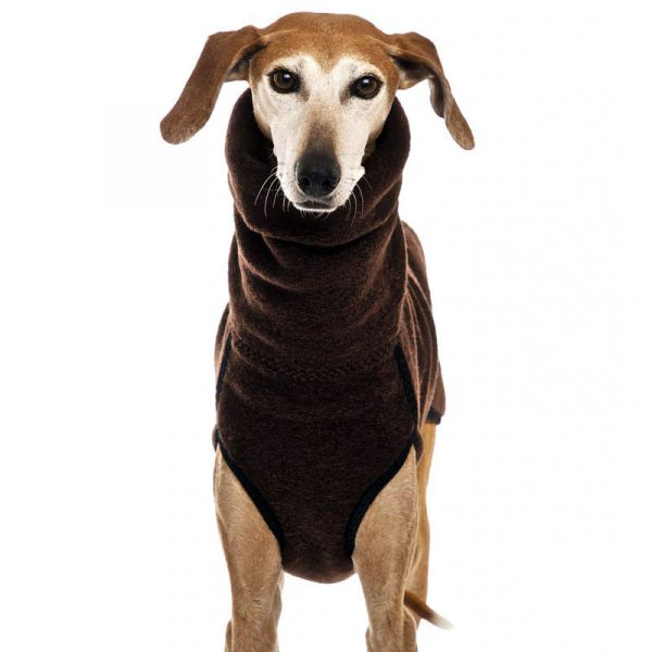 gordy dog clothing winter collection light brown color