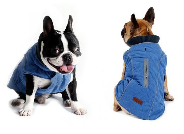 stella winter coat for dogs blue color image
