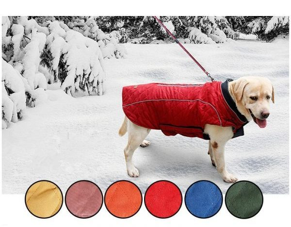 stella winter coat for dogs all colors labladour image
