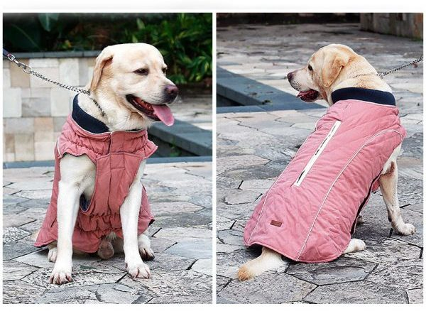 stella winter coat for dogs pink color labladour image